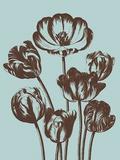 Tulip  no 18