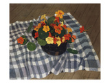Bowl of Nasturtiums