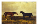 The Earl of Granards's Bright Bay Filly and Dark Bay Stallion Standing in an Extensive Landscape