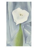 Calla Lily on Grey  c1928