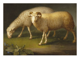 A Ram and a Sheep