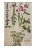 Syrian Sage  an Iris  a Gladiolus and Red Valerian Above a Double- Flowered  Nigella from