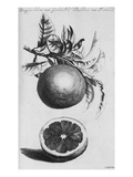 Gardens  Fruits  Flowers and Designs for Mazes and Parterres; De Koninglycke Hovnier Aanwzende De…
