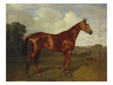 Prince Hatzfeldt&#39;s Chestnut Gelding &#39;Ascetic&#39;s Silver&#39; in a Paddock