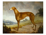 A Tan Greyhound Bitch in an Extensive River Landscape