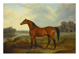 A Bay Stallion in a River Landscape