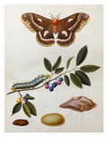 Illustration from &#39;The Natural History of the Rarer Lepidoterous Insects of Georgia&#39;