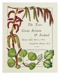 The Trees of Great Britain and Ireland  Volume 1