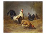 Poultry Feeding