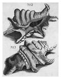 The First Book of Any Size Restricted to Molluscs; Ricreatione Dell'Occhio E Della Mente Nell'…
