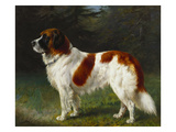 A St Bernard on the Edge of a Wood