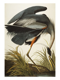 Great Blue Heron (Ardea Herodias), Plate Ccxi, from 'The Birds of America' Giclée par John James Audubon