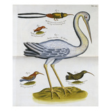 Heron and Humming Birds  from 'A Voyage to the Islands of Madera  Barbados