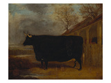 A Black Bull Standing by a Cowshed  an Extensive Landscape Beyond