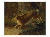A Hare in a Landscape