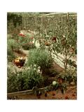 House & Garden - January 1956
