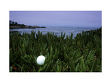 Cypress Point Club  Hole 16