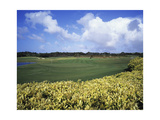 Sandy Lane Country Club Green Monkey  Hole 4