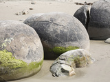 Moeraki Boulders  Koekohe Beach  New Zealand