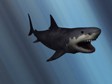 A Megalodon Shark from the Cenozoic Era