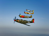 A P-36 Kingcobra  Two Curtiss P-40N Warhawks  and a P-51D Mustang in Flight