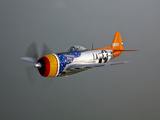 A Republic P-47D Thunderbolt in Flight