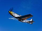 A P-51D Mustang Kimberly Kaye in Flight