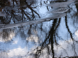 Leafless Trees Casting Reflections in Calm Water