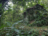 An Abandoned Taro Farmer's Shack in a Lush Rain Forest on Molokai