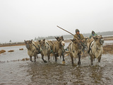 A Nomadic Komi Reindeer Herder Drives Through a Pool on Permafrost
