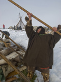 Nomadic Komi Reindeer Herders Assemble Chums over their Belongings