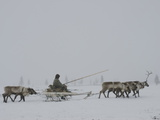 A Komi Reindeer-Herder on the Tundra in Heavy Whiteout Fog