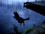 A Dog Jumping into Lake Banyoles