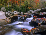 Little Pigeon River Among Rocks and Maple Leaves  Great Smoky Mountains Nat&#39;l Park  Tennessee