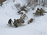 Komi Nomadic Herders Slow Down Sleds from Crushing Reindeer