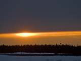 Sunset Glows over a Taiga Forest of Spruce and Birch Trees