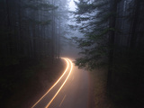 Fog Shrouds a Forest Road in Redwood National Park