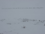 A Komi Reindeer-Herding Clan on the Tundra in Heavy Whiteout Fog