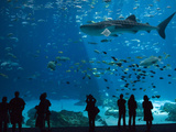 Visitors at the Georgia Aquarium in Atlanta