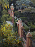 The Gardens of the Alcazar Palace  Seville