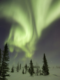Northern Lights or Aurora Borealis over Frozen Tundra  Boreal Forest  North America