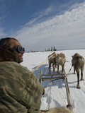 A Nomadic Komi Reindeer Herder Drives His Team Through Spring Snow