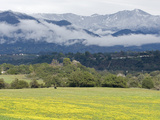 A Field of Mustard Below the Santa Ynez Mountains from Oak View