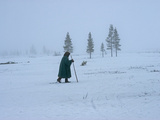 A Nomadic Komi Reindeer Herder Walks in Front of Spruce Trees