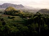 Early Morning Landscape of Cuba's Tobacco Region