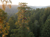 Ecologists Spend the Night in a Newly Discovered Giant Redwood Tree