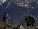 A Ladakhi Person Approaches a Yak in the Zanskar Valley