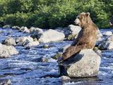 Brown Bear (Ursus Arctos) Sitting on Rock in River, Kamchatka, Russia Papier Photo par Sergey Gorshkov/Minden Pictures