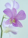 Close Up of a Purple Orchid in a Hotel Lobby