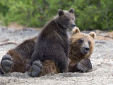 Brown Bear (Ursus Arctos) Mother and Cub  Kamchatka  Russia